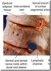 Spinal Joint care
